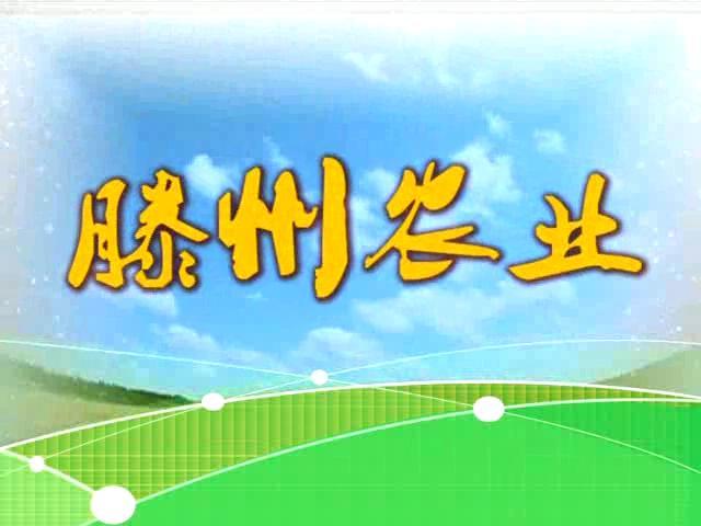 滕州农业2019-8-5期